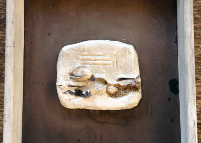 Materialbild mit Muscheln